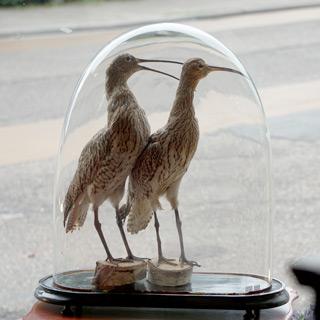vogelsglobe